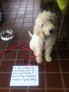 Dog Shaming.. I like to jump up and pull down my Dad's shorts in front of the neighbors