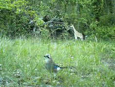 Wild Wood en Provence: jay dog and walkers