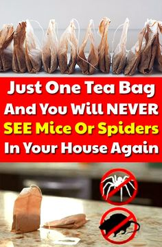 Learn in this article how to use tea bags to get rid of mice. Also, you can use peppermint tea bags for spiders. Learn in this article how to use tea bags to get rid of mice. Also, you can use peppermint tea bags for spiders. Household Cleaning Tips, Cleaning Recipes, House Cleaning Tips, Diy Cleaning Products, Cleaning Solutions, Cleaning Hacks, Weekly Cleaning, Pest Solutions, Diy Mice Repellent