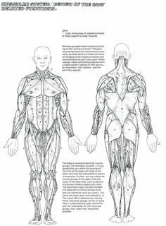 Human Anatomy Coloring Book Elegant the Muscular System Coloring Pages Coloring Home Fruit Coloring Pages, Dog Coloring Page, Free Coloring Sheets, Printable Coloring Sheets, Coloring Pages To Print, Coloring Pages For Kids, Adult Coloring, Coloring Books, Human Body Anatomy