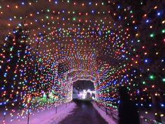 Experience the magic of the Detroit Zoo in winter as you take in ...