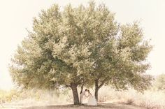 Massively awesome tree for wedding photos. Wedding Photography. Vis Photography. Condor's Nest Ranch.