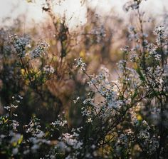689 images about Nature on We Heart It