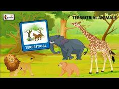 Terrestrial animals list   Animals on Land   Kindergarten learning videos playlist