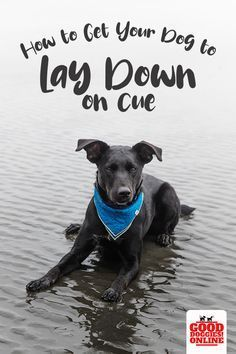 How to teach your dog to lay down on cue. Want a good way to get your dog to stay? Check out these easy dog training tips to get your dog to lay down and stay in place. Puppy Obedience Training, Training Your Puppy, Potty Training, Leash Training, Training Schedule, Training Dogs, Dog Training Techniques, Dog Training Videos, Training Quotes