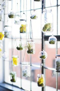 Sunset Loft Wedding Hanging Glass Jar Alter Backdrop Small succulents in glass jars create both unique interest and unexpected color. Air Plants, Indoor Plants, Indoor Hanging Planters, Hanging Terrarium, Glass Terrarium, Diy Planters, Green Plants, Deco Time, Glass Jars