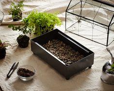 How to Plant a Closed Terrarium http://www.gardenista.com/posts/gardening-101-how-to-make-a-closed-terrarium