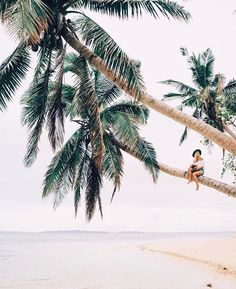 beach, sun-bleached days, palm trees, tropical happy in a nutshell Summer Vibes, Summer Sunset, Summer Beach, Tumblr Ocean, Photos Black And White, Travel Photographie, Tropical Vibes, Tropical Paradise, Adventure Is Out There