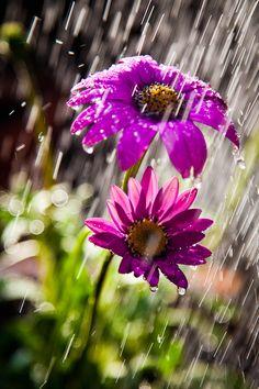 Rain and Coffee Sound Of Rain, Singing In The Rain, Paul Jean Toulet, Rain Crafts, Rain And Coffee, Rain Wallpapers, I Love Rain, Rain Painting, Autumn Rain
