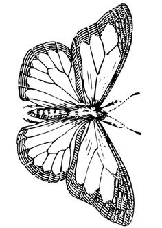 coloring page butterfly coloring picture butterfly free coloring sheets to print and download