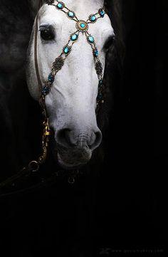 baroque horse tack - Szukaj w Google