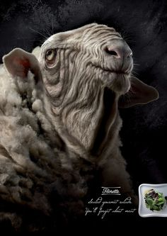 """Florette: Sheep      """"Sealed gourmet salads. You'll forget about meat."""" Agency: Grey, Barcelona, Spain"""