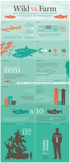 Wild vs Farm:  How wild and cultivated salmon impacts our health and environment.  #infographic