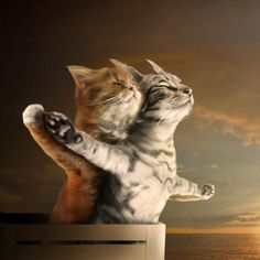 I love cats Cute Baby Animals, Animals And Pets, Funny Animals, Exotic Animals, Cute Kittens, Cats And Kittens, Cats Bus, Cats Meowing, Siamese Cats
