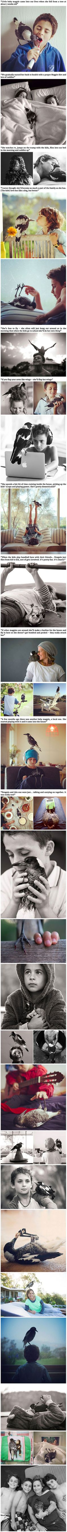 Unlikely Friendship Begins After Family Rescues Magpie, and These Photos Prove It