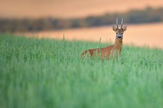 """https://flic.kr/p/svCkGV 
