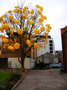 Umbrella Tree By Sam Spencer