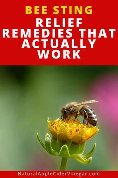 This bee sting relief remedies helps you relieve bee sting pain. This article contains a natural remedy to help you relieve bee sting pain. Use this to help you relieve bee sting pain and keep your body healthy. Check out this great recipe to naturally relieve bee sting pain and stay healthy without using harmful ingredients that are bad for you. #beestingpain #beestingremedy #natrualcare #homeremedy Bee And Wasp Stings, Remedies For Bee Stings, Bee Stings Relief, Emergency Care, Natural Antibiotics, Natural Home Remedies, Natural Treatments, How To Stay Healthy