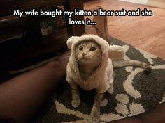 Kitten In A Bear Suit