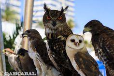 Reunião de caçadores implacáveis
