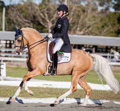 Advance Level Dressage German Riding Pony gelding Cute Horses, Horses For Sale, Beautiful Horses, Palomino, Cute Horse Pictures, Horse Photos, Horse Training, Training Tips, Western Riding