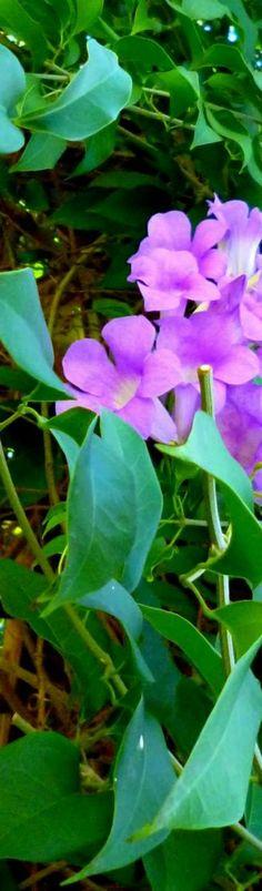 #caribbean #caribbeanlifestyle #tropicalfoliage
