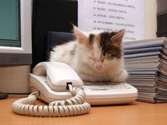 Telefon oder Schlafplatz? Für diese Katze auf jeden Fall beides – Bild: Shutterstock / Anna Jurkovska    www.einfachtierisch.de