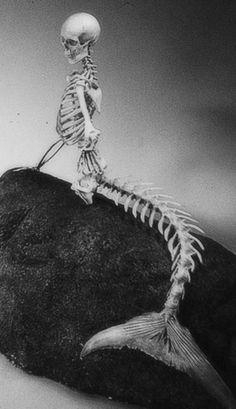The skeleton mermaid