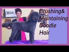 Check out today's video on Global Groomers TV This is a very fun video and also a request from Dooodle Eh? This is A step-by-step brushing an. Schnauzer Grooming, Poodle Grooming, Black Labs, Black Labrador, Equine Photography, Animal Photography, Goldendoodle, Yorkie, Black Lab Puppies
