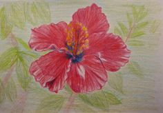 New listing in our shop! Hibiscus drawing with color pencil by TwinSisCreations on Etsy, $25.00