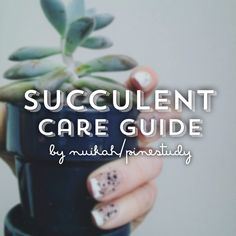"""pinestudy: """" Succulent Guide Congratulations on becoming a proud plant parent! Welcome to to the wonderful world of succulents and cacti, here is a small guide of how to take care of your succulents..."""