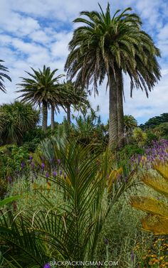 The Isles of Scilly in Spring – Images From the Scilly Isles in Spring – Including How to Visit - tropical garden ideas Tropical Gardens, Tropical Plants, Scilly Isles, Shower Pics, Spring Images, Reading At Home, England, Plant Species