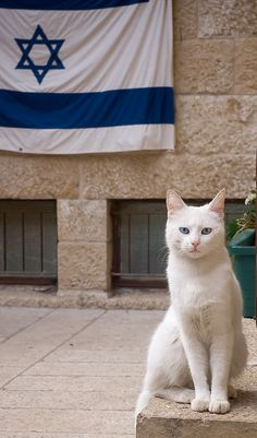 This sweet little kitty sits with Israel. (The reason why I wrote 'sits' is because little kitty is sitting. Crazy Cat Lady, Crazy Cats, Terre Promise, Heiliges Land, Arte Judaica, Israel Palestine, Shabbat Shalom, Domestic Cat, Holy Land