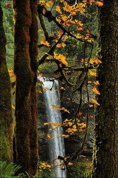 South Falls, Silver Falls State Park, Oregon #oregon #waterfall #nature #pnw #autumn #traveloregon