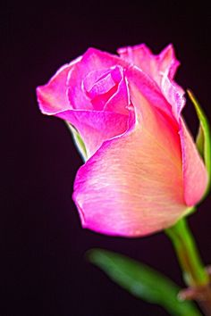 Beautiful 01679-Beautiful Repo Love Moments