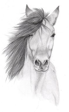 Easy pencil drawings, sketches of horses, easy drawings of animals, easy ch Easy Pencil Drawings, Pencil Sketches Of Animals, Horse Pencil Drawing, Pencil Sketch Drawing, Horse Drawings, Art Drawings Sketches, Drawing Ideas, Drawing Animals, Sketches Of Horses