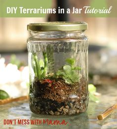 DIY Terrariums in a Jar Tutorial - from @Don Tequila Tequila't Mess with Mama -Y