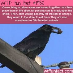 Smartest animals in the world? - WTF fun facts