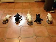 Funny pictures about Five little puppies. Oh, and cool pics about Five little puppies. Also, Five little puppies. Little Puppies, Cute Puppies, Cute Dogs, Dogs And Puppies, Doggies, Labrador Puppies, Baby Dogs, Labrador Retrievers, Baby Animals