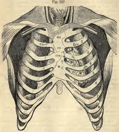 A tribute to the art in medical science. Medical Drawings, Medical Art, Medical Science, Physiology, Biology, Anatomy, Illustration, Animals, Facts