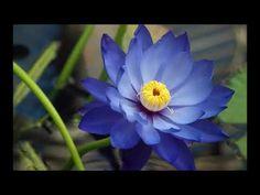 deepak chopra - meditations for stress relief - one of my faves! What Is Meditation, Meditation For Stress, Morning Meditation, Meditation Benefits, Daily Meditation, Chakra Meditation, Meditation Music, Mindfulness Meditation, Meditation Youtube