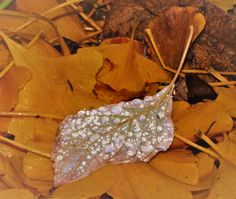 glitzernde Wassertropfen auf einem Herbstblatt, Foto: S. Hopp