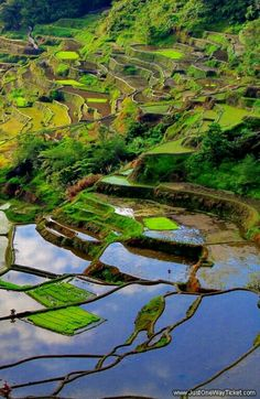 Rice field terraces in Banaue, Philippines