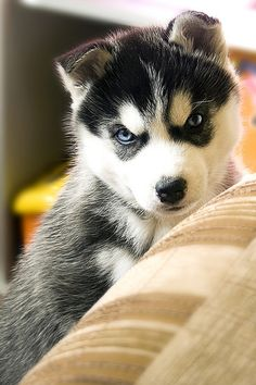 I shall frighten you with my cuteness...grrrr.