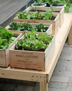 A wine box garden.....maybe I should pioneer an apple sauce container garden. As seen on designmom.com