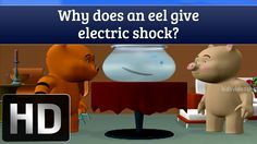 Interesting Facts - Why Does An Electric Eel Give Electric Shock?