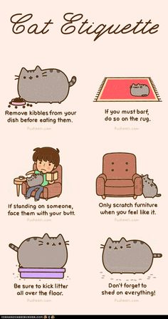 Cat Etiquette.....Oh Rocky, I love you, you shedding, butt-in-your-face,  puke-machine <3