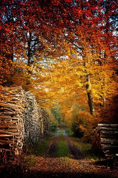 """Back in the woods my dad, uncle and grandpa each winter would cut and stack wood for the coming years...to allow it to """"season"""" ...I love the scent of a wood fire...especially if it a fruit wood...like apple, cheery, or peach..."""