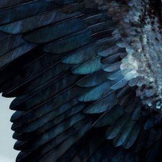 blue, feather, and wings afbeelding