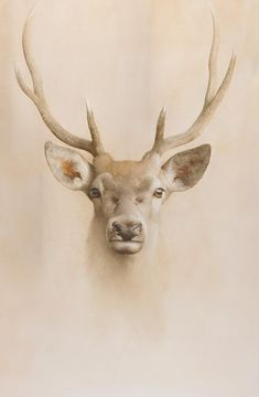 Marzio Tamer, Young Deer, dry brush watercolor, cm 130 x 77,8 deer muzzle animals nature realism contemporary art salamon tamer